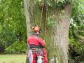 Baum 001_