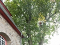 Baum 003_