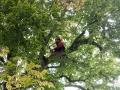 Baum 004_