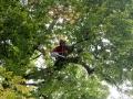 Baum 005_