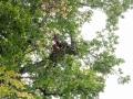Baum 006_