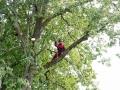 Baum 008_