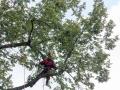 Baum 009_