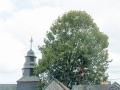 Baum 010_
