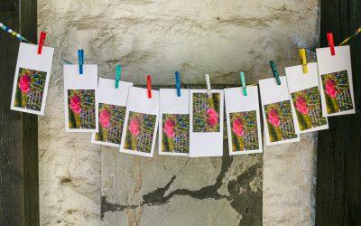 Hoffnung hamstern – Blumen säen